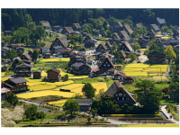Photo Credit: Wikimedia Commons - Shirakawa-go during summer.