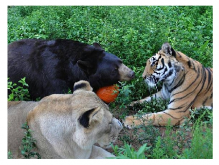 Photo Credit: ULN TV - All three animals are male and are almost 13 years old.