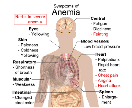 Signs You May Be Anemic | The Readers Bureau