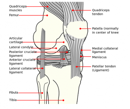 Photo Credit: Wikipedia - Knee diagram.