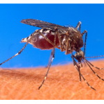 How To Protect Yourself From Chikungunya