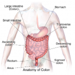 Keeping The Colon Healthy