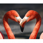 Engage All Five Senses For Valentine's Day