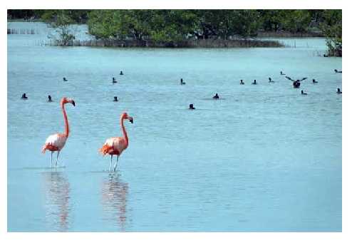 Photo Credit: Wikimedia Commons - Red flamingos in Zapata.
