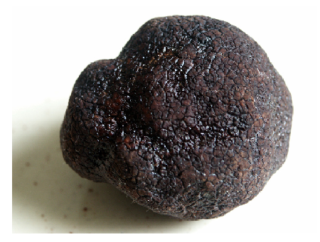 Photo Credit: moi-même - Black Périgord truffle