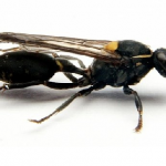 Study Shows Wasp Puts Sting To Cancer