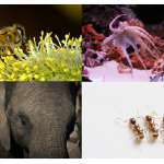 5 Smartest Animals On The Planet