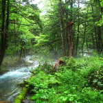 Forest Bathing: A New Health Phenomenon