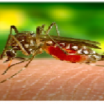 Dengue Raises Its Ugly Head In St. Vincent And The Grenadines